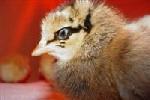 2009 Chicks